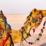 Agencia-viajes-en-India-7